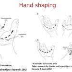 手指の対立運動と気づき:脳卒中(脳梗塞・脳出血)片麻痺のリハビリ: