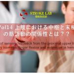 vol.14: 脳卒中/脳梗塞のリハビリ論文サマリー:上肢における中枢と末梢の筋活動の関係性とは??