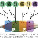 脳卒中(脳梗塞・脳出血)片麻痺のリハビリ:上肢のリーチその② バイオメカニクス的側面~Compartmentalization~