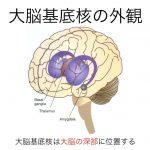 <第3回:脳科学講座Blog>~大脳基底核・小脳編~