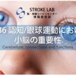 vol.36:認知・眼球運動における小脳の重要性 脳卒中/脳梗塞のリハビリ論文サマリー