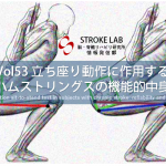 vol.53:立ち座り動作に作用するハムストリングスの機能的中身   脳卒中/脳梗塞のリハビリ論文サマリー