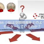 vol.66:小脳は空間情報をどのように把握しているのか?            脳卒中/脳梗塞のリハビリ論文サマリー