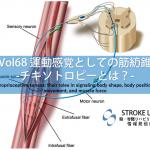 vol.68:運動感覚としての筋紡錐のエビデンス-チキソトロピーとは? 脳卒中/脳梗塞のリハビリ論文サマリー