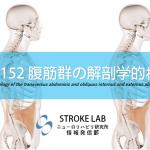 vol.152:腹筋群の解剖学的検討      脳卒中/脳梗塞リハビリに関わる論文サマリー