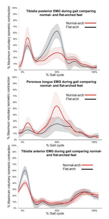 Foot posture influences the electromyographic activity of selected lower limb muscles during gait.3