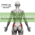 vol.167:歩行スピードと中殿筋活動   脳卒中/脳梗塞のリハビリ論文サマリー