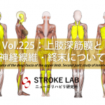 vol.225:上肢深筋膜と神経線維・終末について   脳卒中/脳梗塞のリハビリ論文サマリー