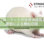 vol.236:ラットの坐骨神経損傷と運動による機能回復   脳卒中/脳梗塞のリハビリ論文サマリー