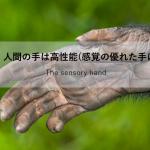 vol.368:感覚に優れた手について  脳卒中/脳梗塞のリハビリ論文サマリー