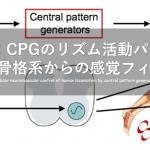 vol.378:CPGのリズム活動パターンを補正する筋骨格系からの感覚フィードバック    脳卒中/脳梗塞のリハビリ論文サマリー